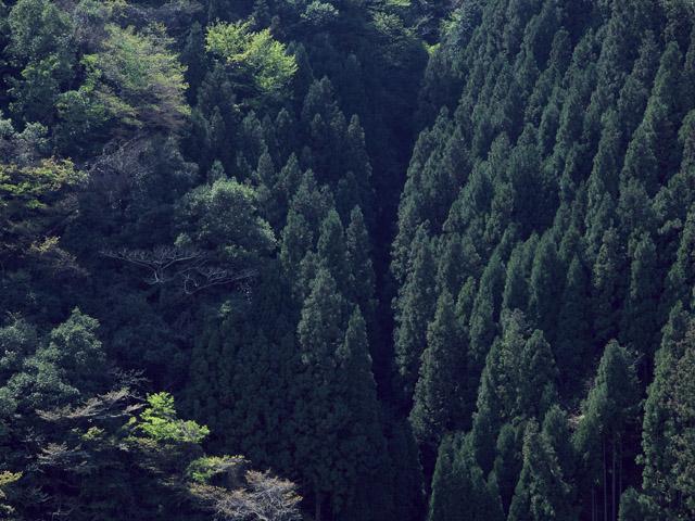 妙法山常信寺