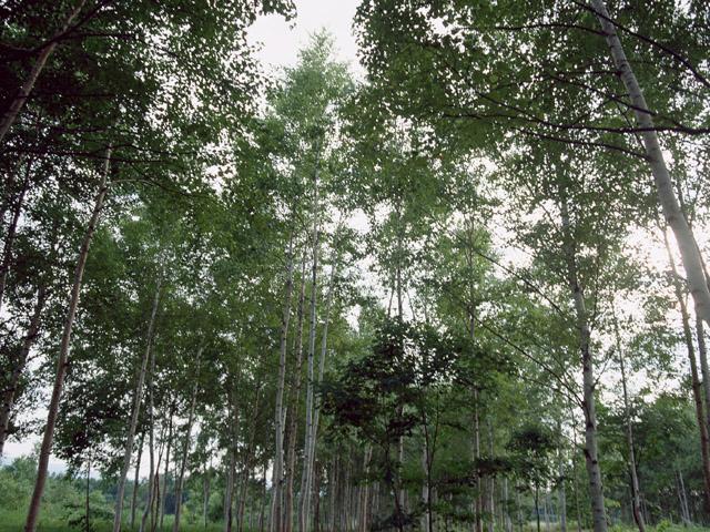 木下川薬師浄光寺